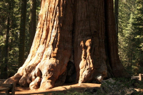world-largest-tree-sequoia-general-sherman